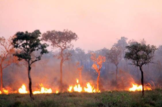 Bombeiros reforçam fiscalização para evitar queimadas em vegetação e terrenos baldios
