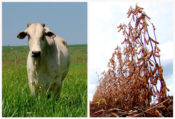 Exportações do agronegócio em MS registram recorde em 2015