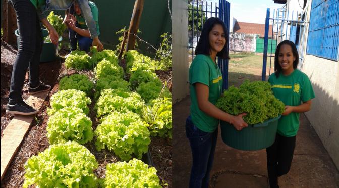 Escola estadual envolve comunidade escolar em cultivo de hortaliças