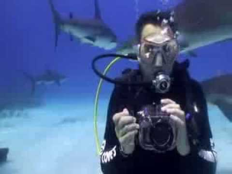 Cavernas e fazendas de Bonito serão cenário para fotografo de tubarões