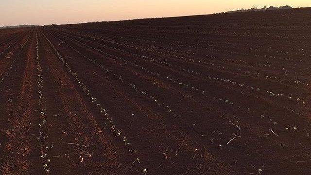 AGRICULTURA Iagro abre cadastramento de área para plantio de soja com expectativa de atingir 2,5 milhões de hectares