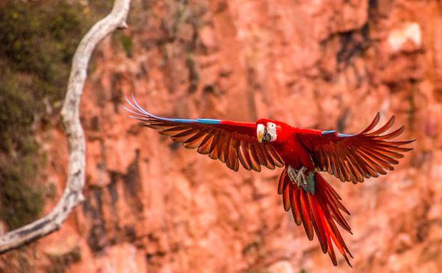 Cidade das araras, Jardim recebe encontro de observadores de aves em outubro