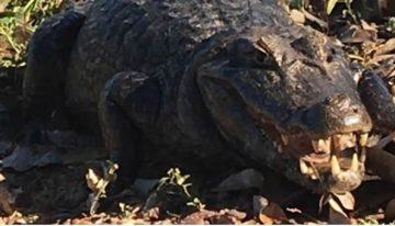 Pesquisadores da UFMS são destaque em reportagem especial sobre o Pantanal
