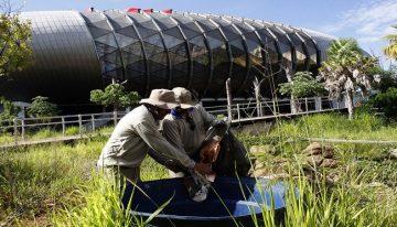 Aquário do Pantanal passa por mutirão contra dengue antes de retomada de obras