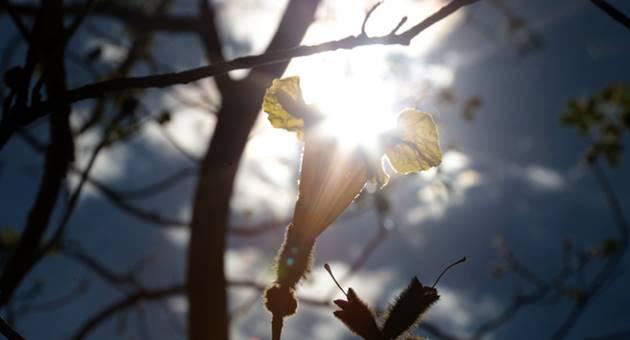 Dia será de sol entre poucas nuvens e baixa umidade do ar na maior parte do Estado. (Foto: Denilson Secreta/Subcom)