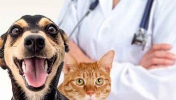 Castração animal: mitos e verdades