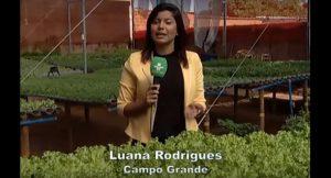 Reportagem da TVE Cultura abordou vantagens da hidroponia, inclusive no campo da sustentabilidade, e foi classificada para a final do Prêmio Famasul de Jornalismo 2018. (Imagem: Reprodução).