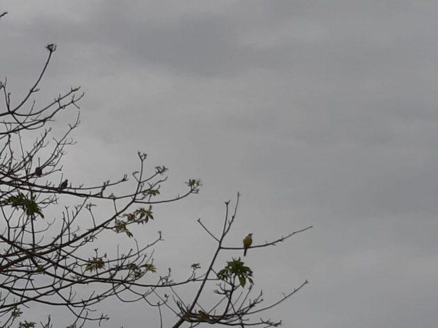 Capital deve registrar céu nublado e chuvas ao longo do dia, temperaturas tendem a cair. (Foto: Humberto Marques)