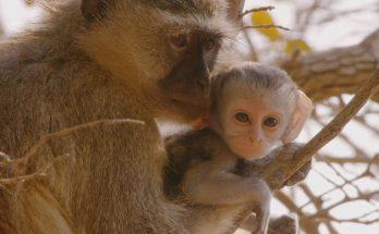 """Love Nature 4K produziu """"A Jornada da Vida"""", com foco na fauna africana. (Foto: Reprodução)"""