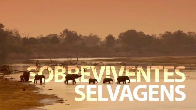 Sobreviventes Selvagens estreia neste domingo no Planeta Terra. (Imagem: Reprodução)