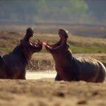 Programa aborda a relação entre a fauna e o meio ambiente. (Foto: Reprodução)